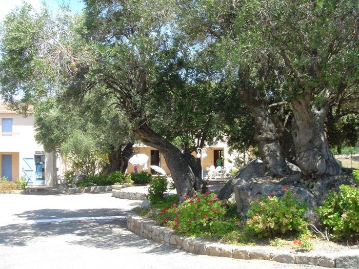 residence corsicana ile-rousse